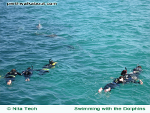 swim-with-the-dolphins-rockingham-150